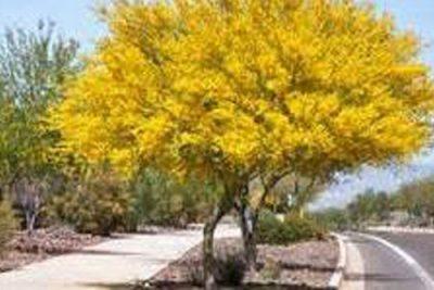 Arizona Trees